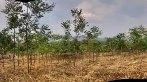ขายด่วนด่วน 950,000 ที่ดินไทรโยค กาญจนบุรี ตำบลลุ่มสุ่ม อำเภอไทรโยค จำนวน 8 ไร่