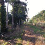 ขาย สวนยางพารา ต.หาดพันไกร อ.เมือง ชุมพร เหมาะสำหรับทำการเกษตร บ้านพัก